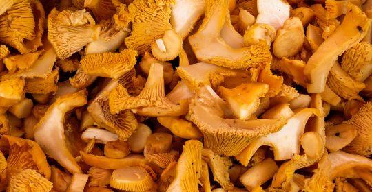 mushrooms-1603661_1920